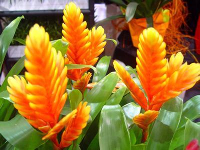 黃玉扇鶯歌