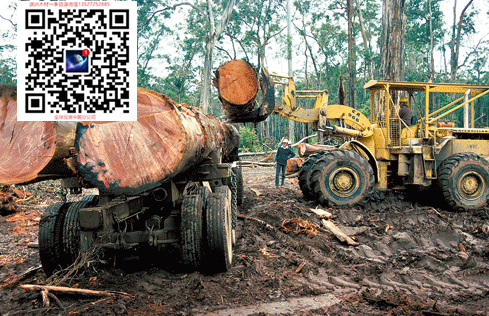 澳洲酸枝 紅木家具澳洲酸枝木原木出口批發